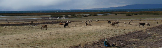 Titicaca---Big-sky-with-animals.jpg